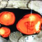 bivouac-vox-populi-steve-roden-2