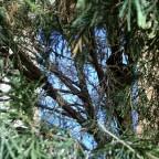 Tree (Inside)